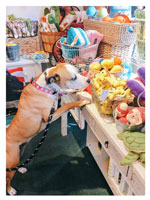Dog shopping for toys