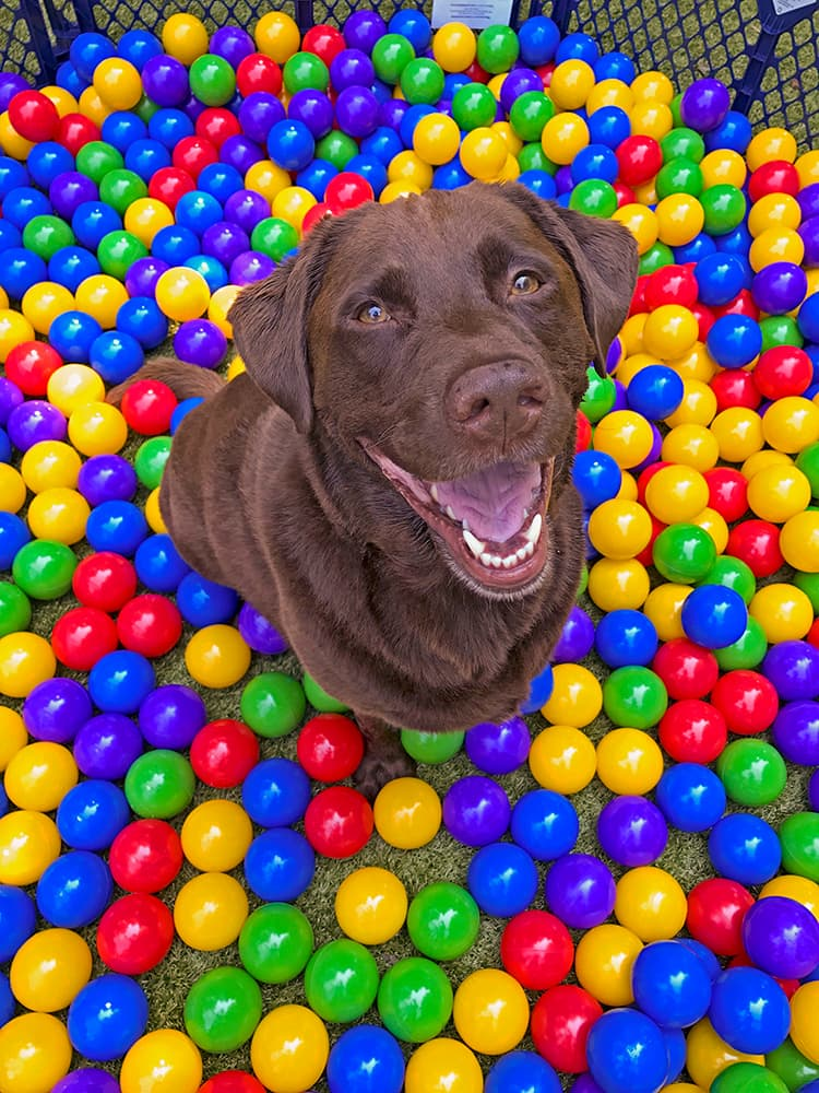 dog in a ball pit