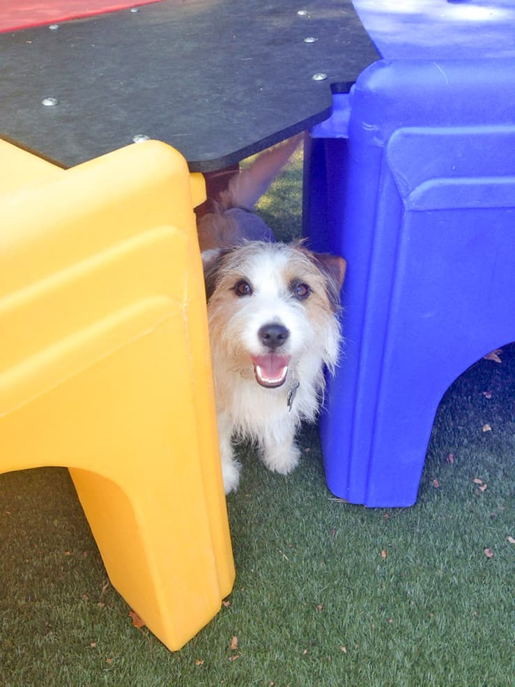 dog hiding under the slides