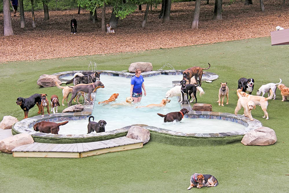dogs at the pool