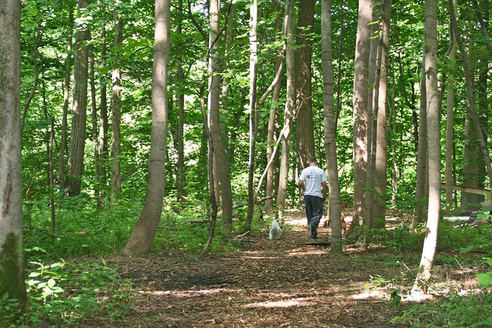 Dogwood Acres staff member walking a dog on a trail