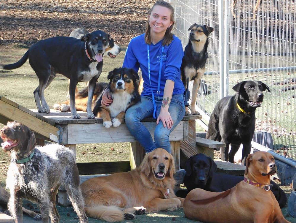 Dogwood Acres staff member with lots of dogs