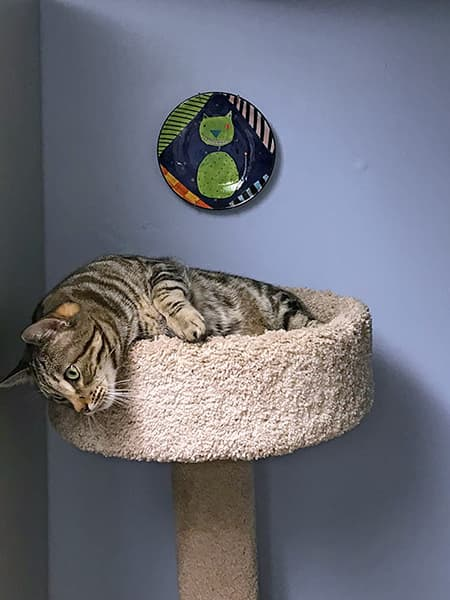 cat lying on a cat tree