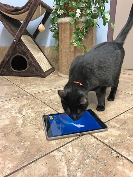 cat watching fish on an iPad