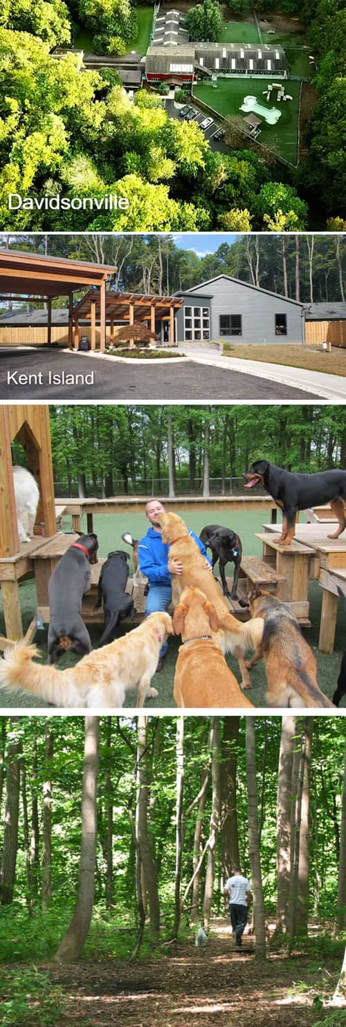 A Distinctly Different Pet Lodging Experience