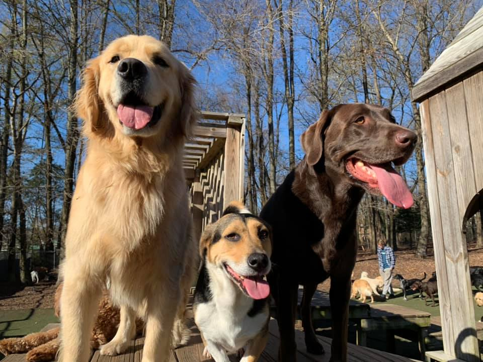 dog friends at Dogwood Acres