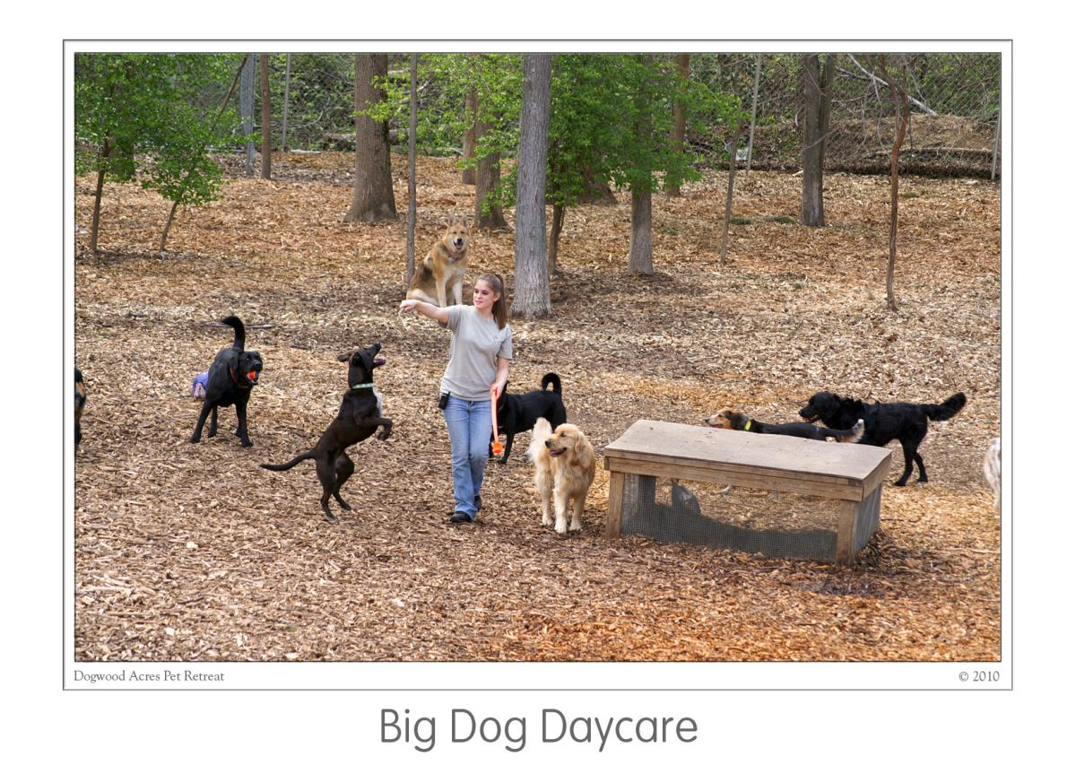 Dog daycare in davidsonville md dogwood acres pet retreat for Dog boarding places near me
