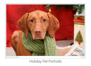 Events Holiday Pet Portraits 2009 (03)b