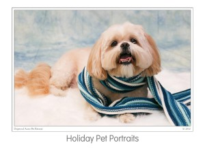 Events Holiday Pet Portraits 2009 (05)b