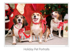 Events Holiday Pet Portraits 2009 (06)b