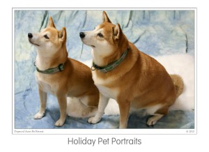 Events Holiday Pet Portraits 2009 (07)b