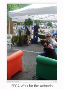 Events SPCA Walk 2010 (07)b